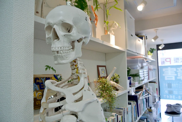 影山鍼灸整骨院 人体模型